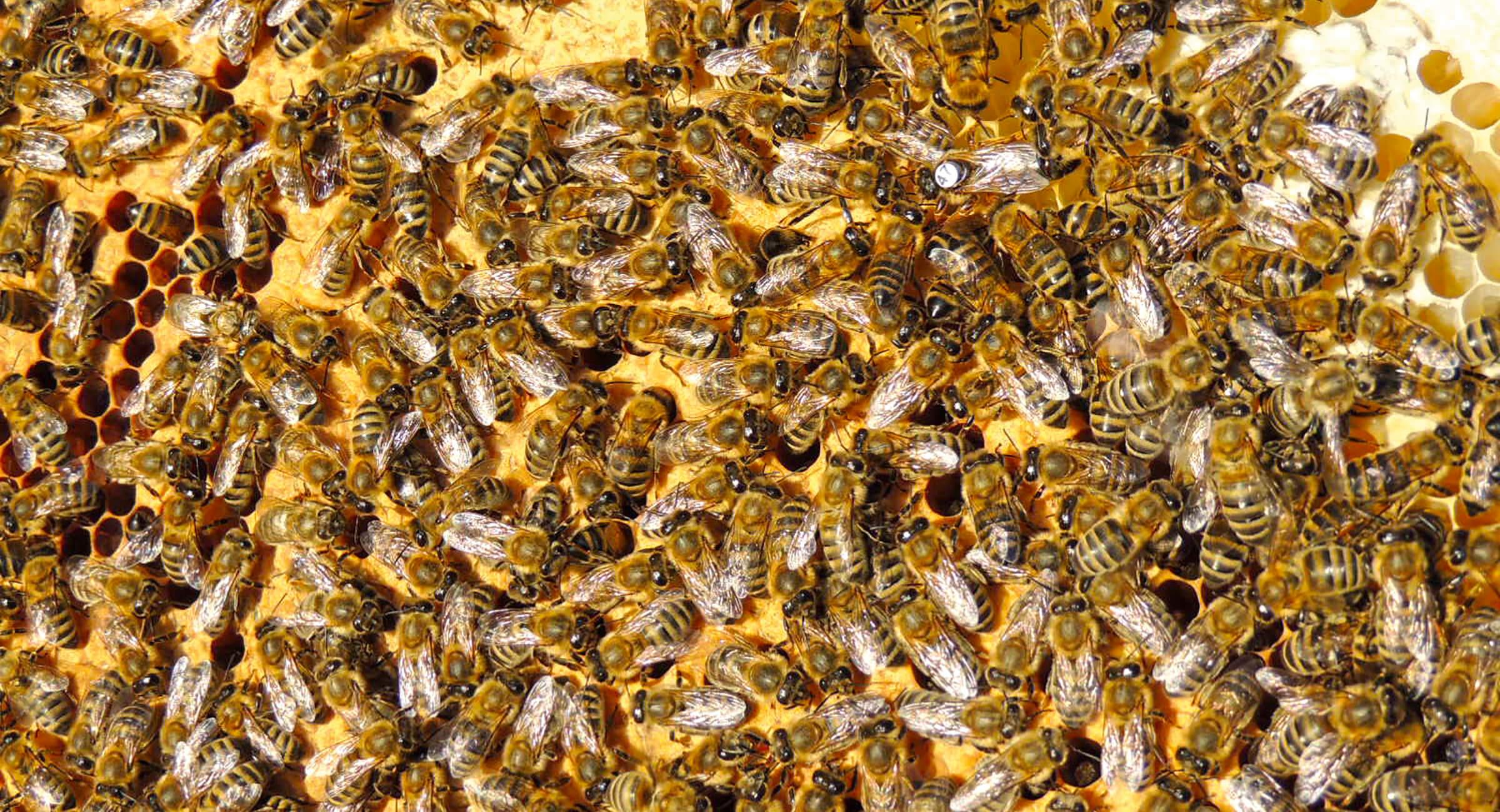Bienenzuchtzentrum Bantin